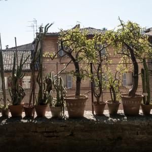 Terrazza Giardino Botanico
